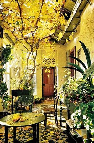 hanging garden in single storey extension